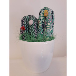 Cactus ferma Finestra